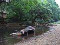 Elephant being bathed(1).jpg
