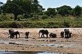 Elephants, Tarangire National Park (1) (28626613701).jpg