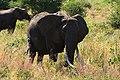 Elephants, Tarangire National Park (19) (28084522793).jpg