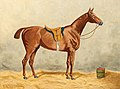 Emil Volkers - Saddled Horse in the Stable.jpg
