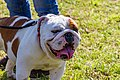 Encontro Dog Institute (41893164642).jpg