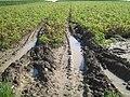 Erosion Verdichtung023.JPG