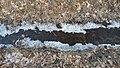 Erweiterungsfläche Vogelmoor Lessienergraben.jpg