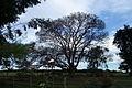 Estrada Manduri - Águas S Bárbara 040709 REFON 12.JPG