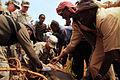 Ethiopia VETCAP, August 2011 (6152921374).jpg