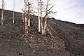 Etna 2008 IMG 1844b.jpg