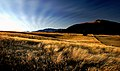 Evening fields. Lake Tekapo.NZ (12765390904).jpg