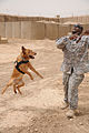 Every dog has its day, including military working dogs DVIDS305576.jpg