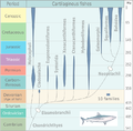 Evolution of cartilaginous fishes.png