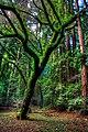 Ewoks Tree.jpg