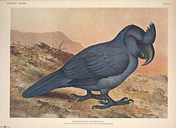 Extinct birds - an attempt to unite in one volume a short account of those birds which have become extinct in historical times - that is, within the last six or seven hundred years - to which are (14752515105).jpg