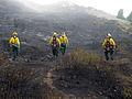 FEMA - 37465 - Fire fighters working in Colorado.jpg
