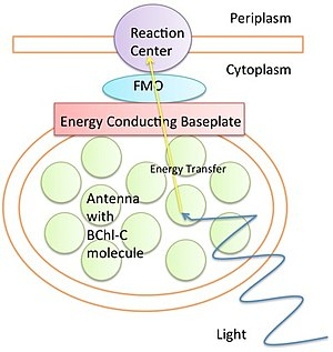 Quantum biology - Diagram of FMO complex. Light excites electrons in an antenna. The excitation then transfers through various proteins in the FMO complex to the reaction center to further photosynthesis.