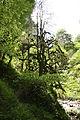 FR64 Gorges de Kakouetta33.JPG