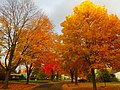 Fall Colors in Madison - panoramio (12).jpg