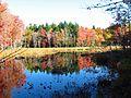 Fall Colors on Marsh Island.JPG
