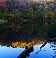 Fall colors log lake reflections - West Virginia - ForestWander.jpg