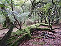 Fallen beech tree in Hollands Wood, New Forest - geograph.org.uk - 265892.jpg