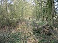 Fallen tree - geograph.org.uk - 1240491.jpg