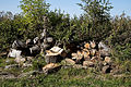 Feeringbury Manor log pile, Feering Essex England 1.jpg
