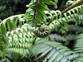 Fern in Abel Tasman National Park.jpg