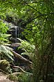 Ferntree Waterfalls.jpg