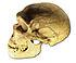 Ferrassie skull.jpg