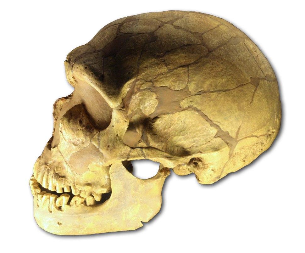 Ferrassie skull