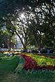 Festival in Royal Botanic Gardens, Sydney.jpg