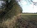 Field near Takeley - geograph.org.uk - 1138437.jpg
