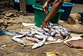 Fish cutting and processing.jpg