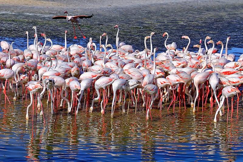 Ras Al Khor Wildlife
