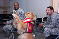 Flickr - DVIDSHUB - Therapy goes to the dogs (Image 4 of 4).jpg