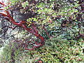 Flickr - brewbooks - Manzanita Streissguth Gardens - Seattle.jpg