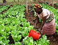 Flickr - usaid.africa - Maza Wanawake Kwanza Growers Association.jpg