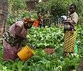 Flickr - usaid.africa - Maza Wanawake Kwanza Growers Association (2).jpg