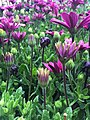Flower (110258195).jpeg
