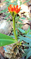 Flower (294).JPG