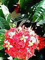 Flower 20161150.jpg