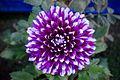 Flowers 107.jpg