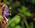 FlyingBugPollinating-Oct15-lighter-cleaner.jpg