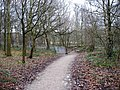 Footpath Stony Cliffe Woods - geograph.org.uk - 1136948.jpg