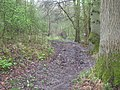 Footpath at Bowsey Hill - geograph.org.uk - 1245903.jpg