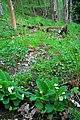 Footpath in Arncliffe Wood - geograph.org.uk - 1289581.jpg