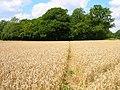 Footpath to Newbridge Wood - geograph.org.uk - 512984.jpg