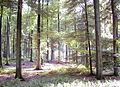 Forêt de Soignes 01.JPG
