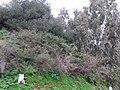 Forêt en Chréa.jpg