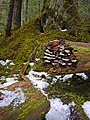 Forest (13179476373).jpg