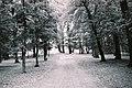 Forest (33129269).jpeg
