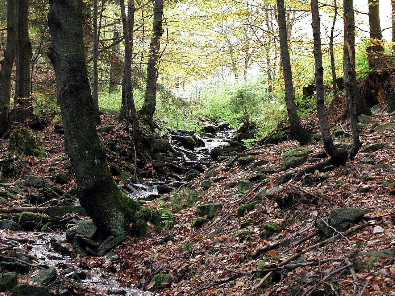 file forest habitat jpg